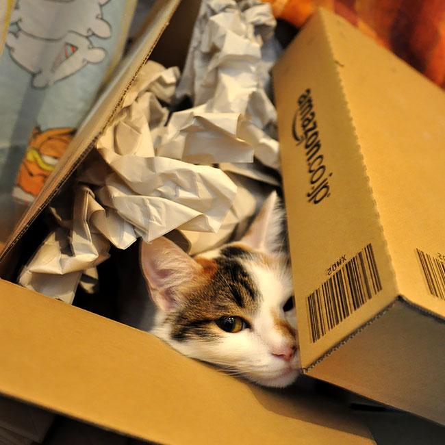 Amazonで届いた直後の店長。